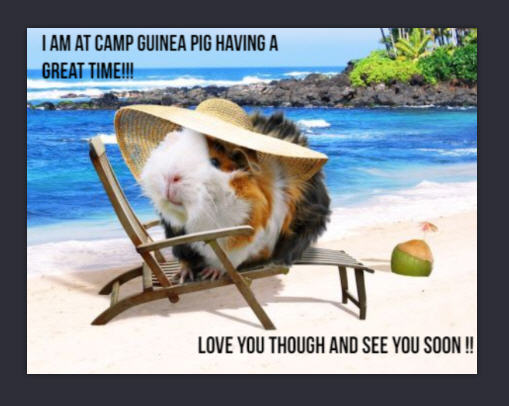 Los Angeles Guinea Pig Rescue - Home